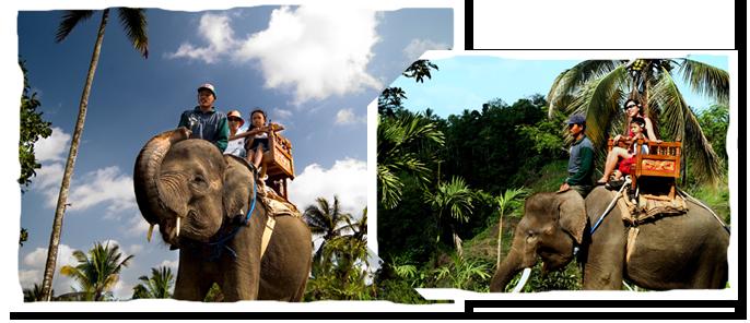 bali adventure tours elephant park
